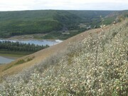 View of the Peace River